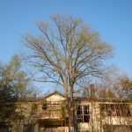 旧清水沢小学校の記憶を夕張の未来の子供たちに引き継ぐために―「校庭木お別れ会」を開催します
